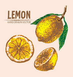 digital detailed color lemon hand drawn vector image