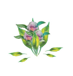 heart leaf peony roses bouquets foe sweet home vector image