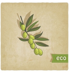 Olive eco background vector