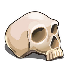 the human skull isolated on white background vector image