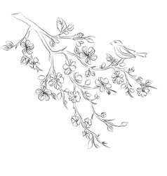 Twig cherry blossoms and bird vector