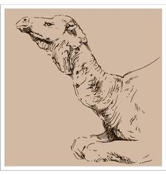 Vintage camel sketch vector image