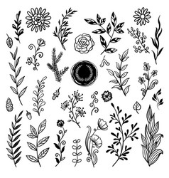 beautiful plants set hand drawn vector image