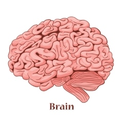 Cartoon brain isolated on a white background vector