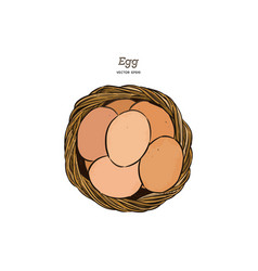 egg in basket hand draw sketch vector image
