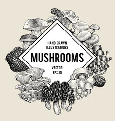 Mushroom hand drawn set of vector