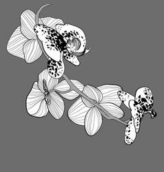 Natural botanical spring concept vector