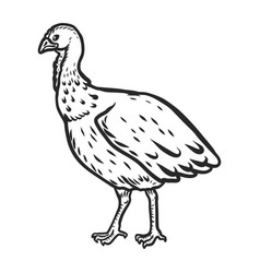 turkey cock female icon hand drawn style vector image