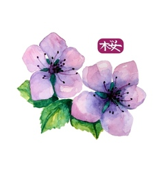 Watercolor elegant flower of japanese sakura vector image