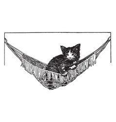 Cat in hammock vintage vector
