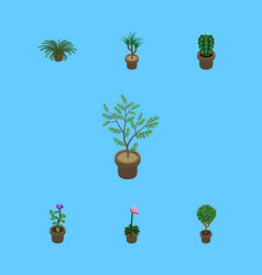 Isometric flower set of plant fern tree and vector