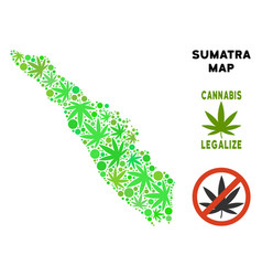 Royalty free cannabis leaves collage sumatra vector