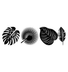 set various tropical black leaves design vector image