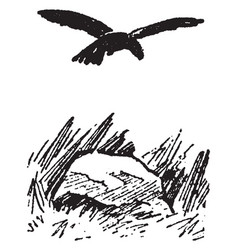 crow vintage vector image