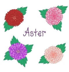 Cute aster set colorful flowers collection of vector
