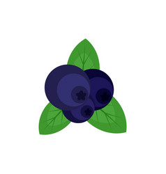 Fresh blueberry icon flat style vector