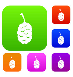 fruit of mulberry set color collection vector image