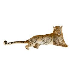 Leopard lying vector