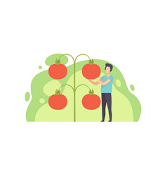Young man standing next to giant growing tomatoes vector