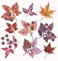 autumn set detailed leaves and berries vector image