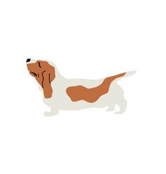 Basset hound dog flat vector
