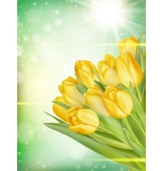 Bouquet of yellow tulips EPS 10 vector