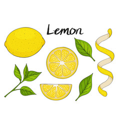 Collection of hand drawn elements yellow lemon vector