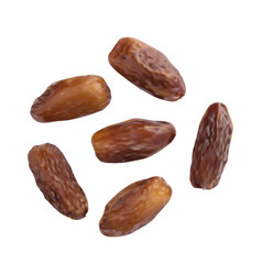dried dates isolated on white background vector image