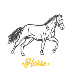 horse black and white objects vector image