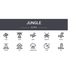 Jungle concept line icons set contains icons vector