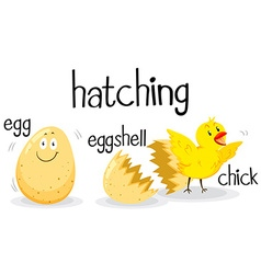 Little chick hatching from the egg vector image