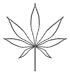 cannabis leaf icon vector image