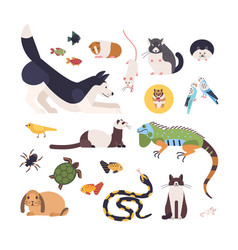 collection of pets isolated on white background vector image