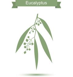 Eucalyptus Isolated on white background vector image