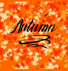 Autumn lettering with leaves vector