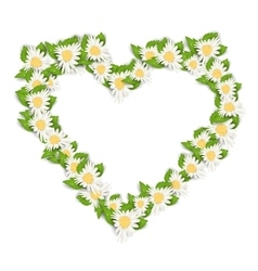Camomile Flowers in Form Heart Isolated on White vector