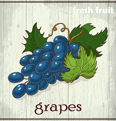 Hand drawing of grapes Fresh fruit sketch vector