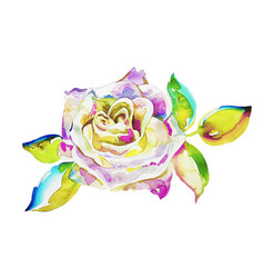 Original watercolor painting pink rose isolated vector