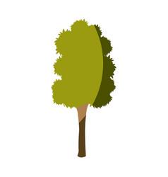 tree plant wood natural leaf image vector image vector image
