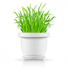 white flowerpot with green grass vector image
