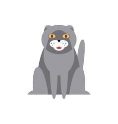 Persian Cat Breed Primitive Cartoon vector image