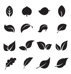 Collection of leaf icons vector image vector image