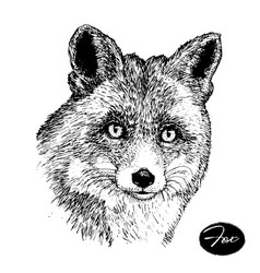 hand drawn ink fox on white background sketch vector image