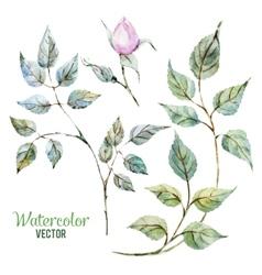 Gentle roses vector image