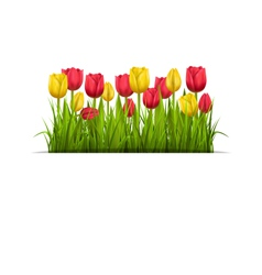 Green grass lawn and tulips isolated on white vector image