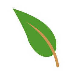 Green leave natura plant botanical vector