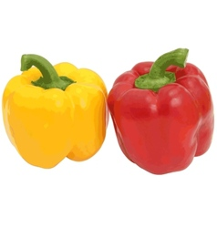 Red and yellow sweet bell pepper isolated on vector image