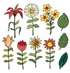 Various summer flowers vector