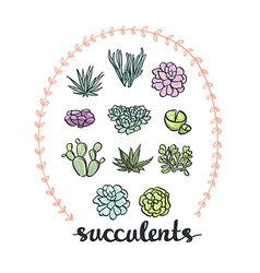 Succulent set cute Plants vector image