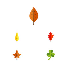 Flat icon leaf set of maple frond alder and vector
